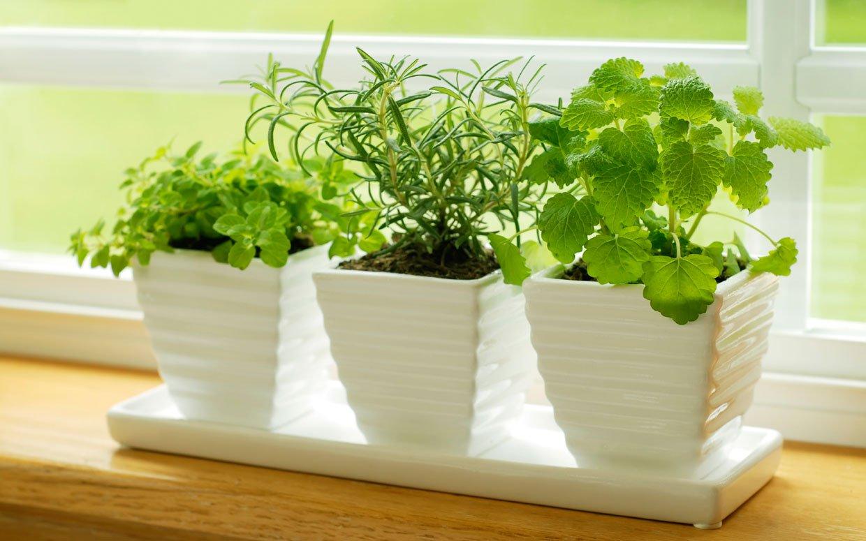 Выращивание зелени на подоконнике фото 86