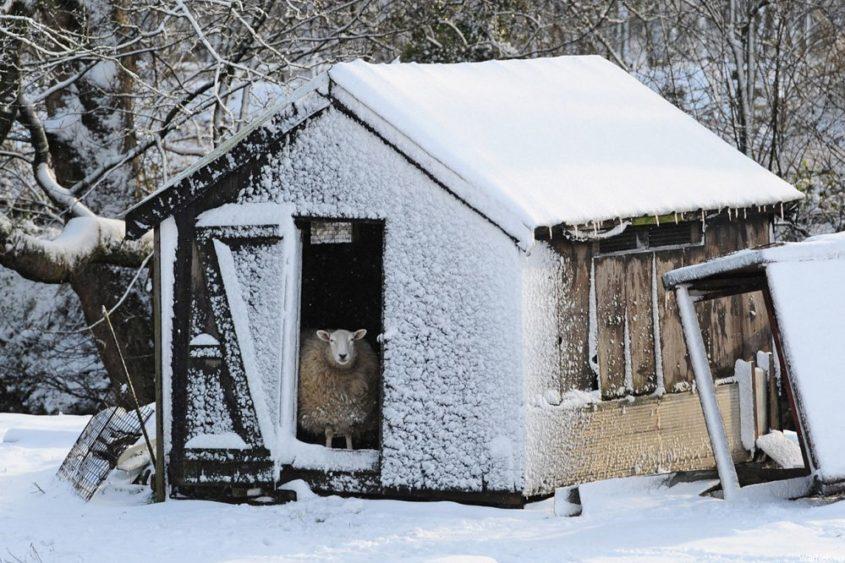 Хозяйственная постройка зимой
