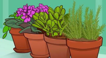Энергетика комнатных растений