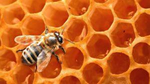 Пчелиный воск для волос