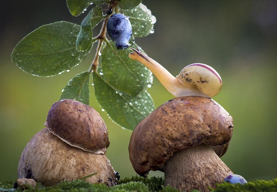 Улитка, сидящая на грибе