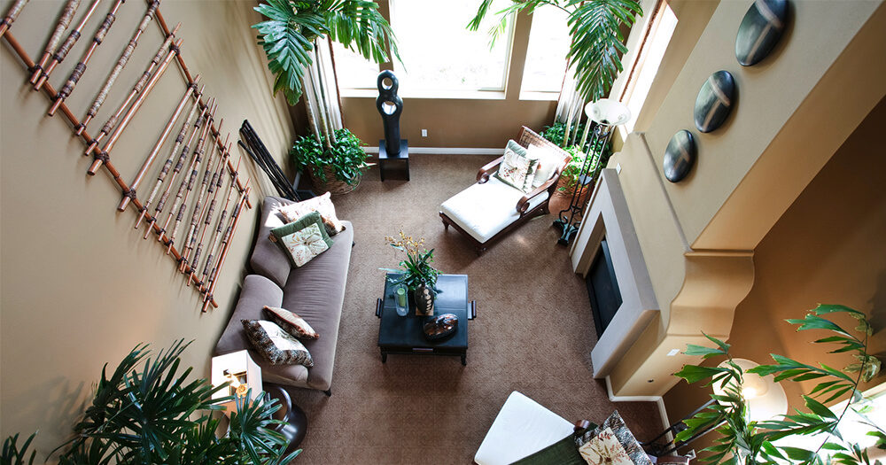 Комнатные растения в дизайне комнаты