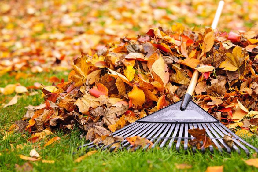 Осенняя уборка листьев на даче