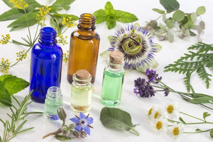Лекарственные растения для сна