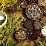 Какие полевые и огородные растения можно использовать в качестве заварки для чая