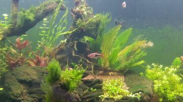 Цветущий аквариум