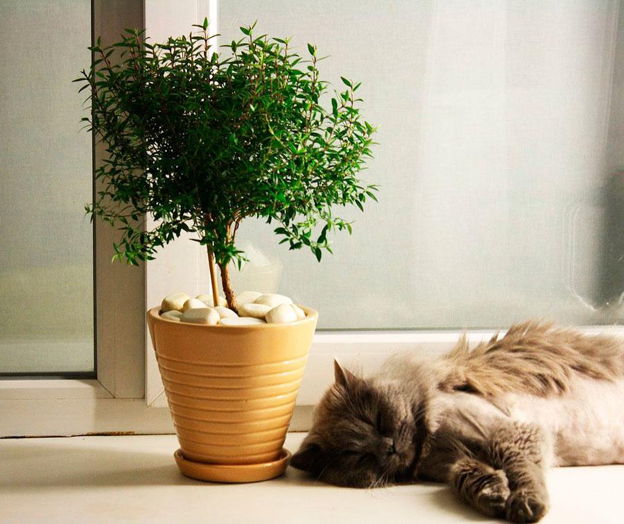 Кот спит рядом с цветком Мирт