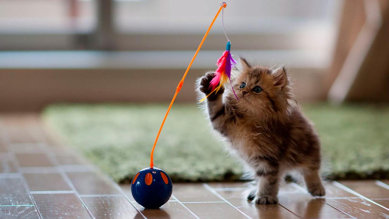 Специальная игрушка может помочь отучить котенка кусаться, кидаться и царапаться
